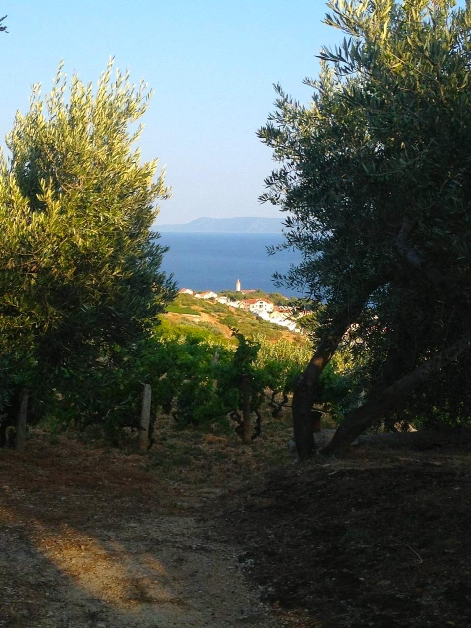 Villa Mira bakketop vin 1