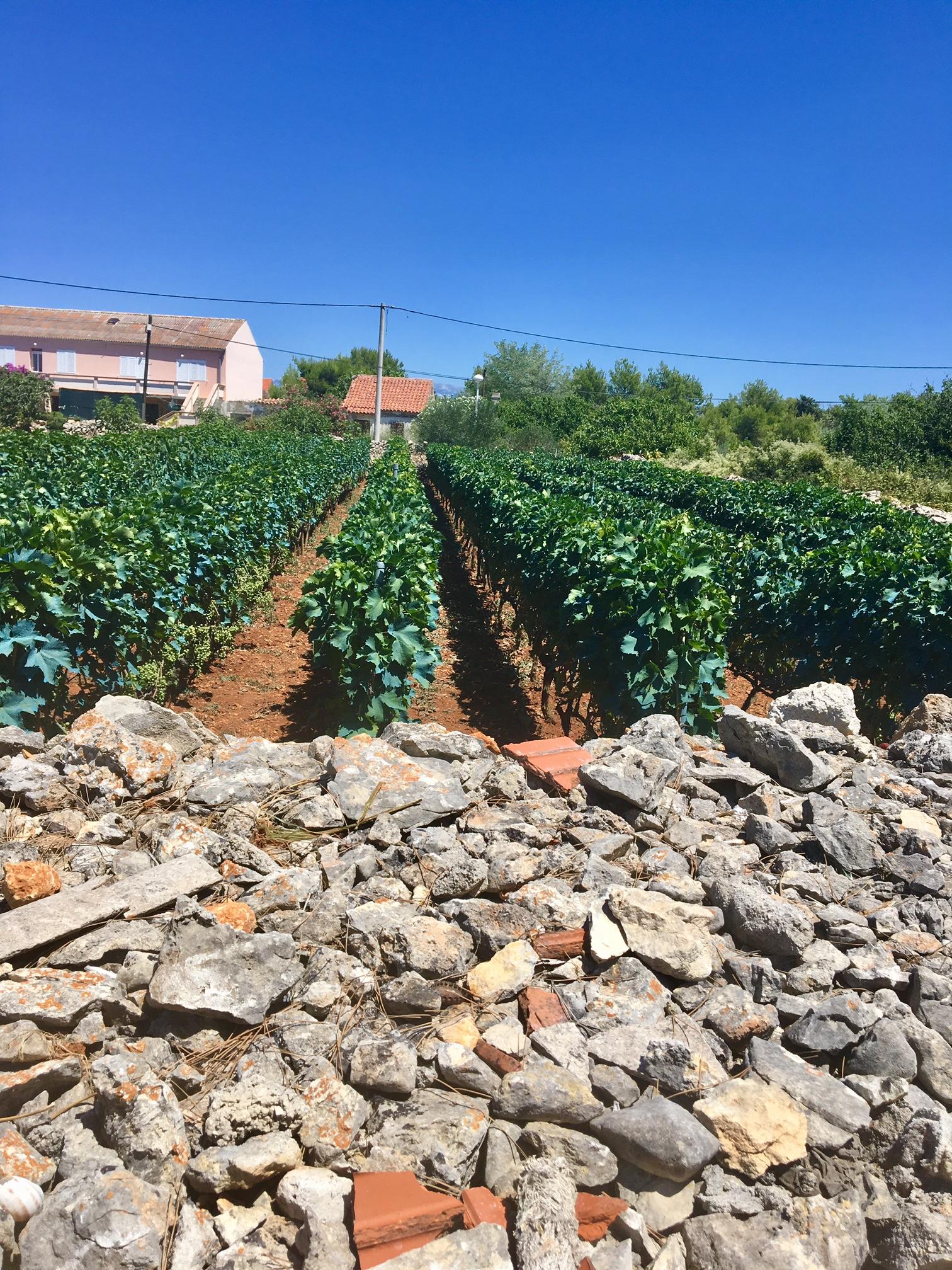 Vir vinmarker