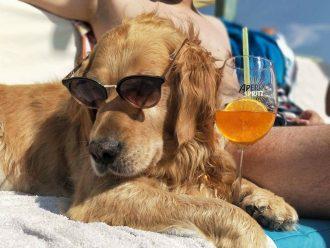 Montys dog beach bar 1